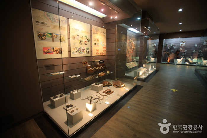 木浦自然史博物館(목포자연사박물관)