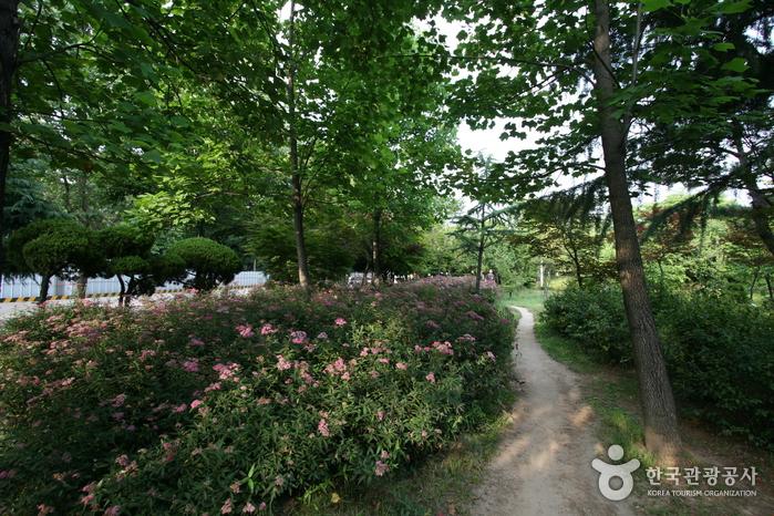 Sinteuri Park (신트리공원)