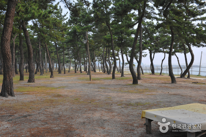 沙川海岸(沙川海水浴場)(사천해변(사천해수욕장))