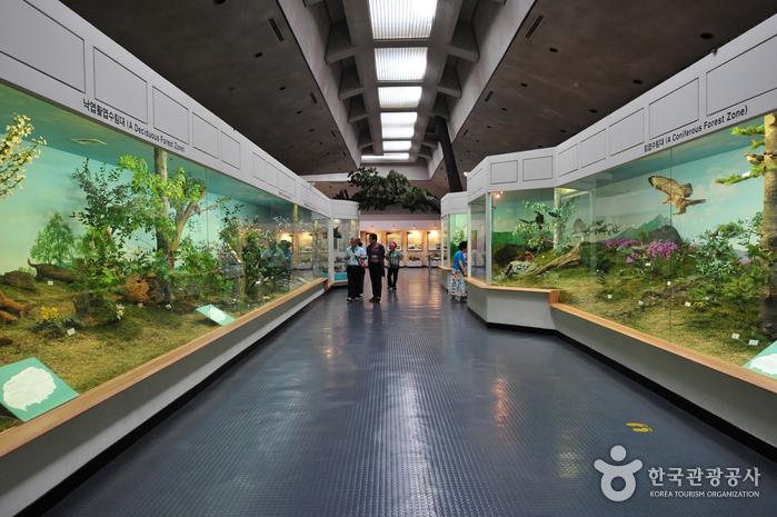 Музей фольклора и естественной истории Чечжу (제주도민속자연사박물관)3