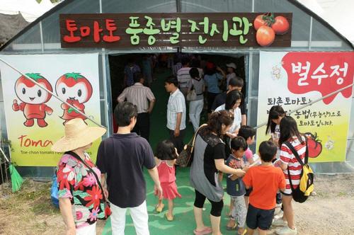 Gwangju Toechon Tomato Festival (퇴촌토마토축제)