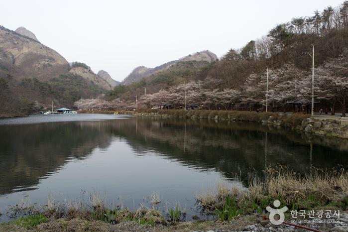 탑영제 저수지에 어린 벚꽃길과 암마이봉의 반영은 마이산 벚꽃의 진수다.