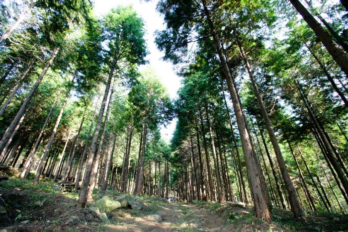 팔영산자연휴양림