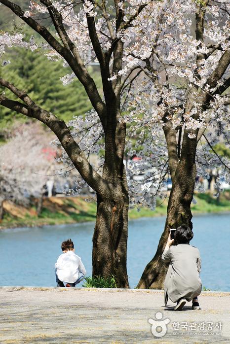 벚꽃나무 아래 뒤돌아 앉아있는 아이를 찍어주는 엄마