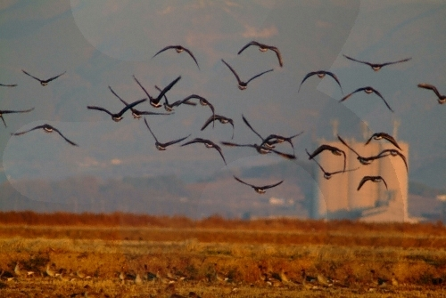 Cheonsuman Bay - Migratory Bird Sanctuary (천수만(철새도래지))