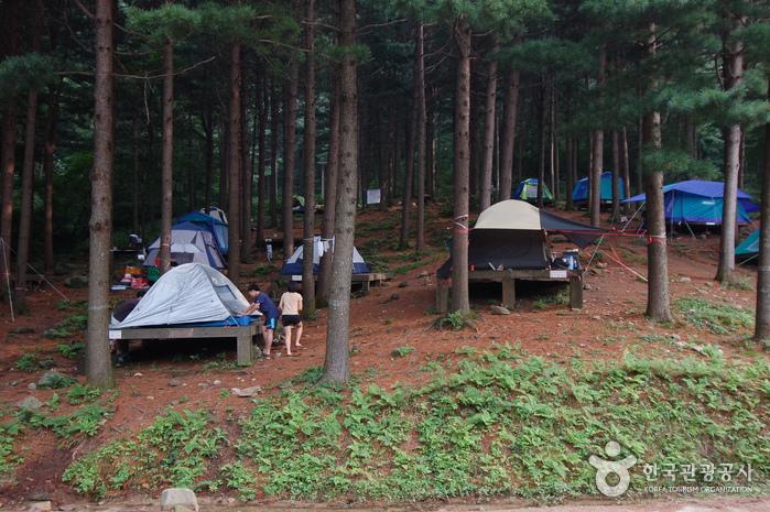 Cheongtaesan National Recreational Forest (국립 청태산자연휴양림)