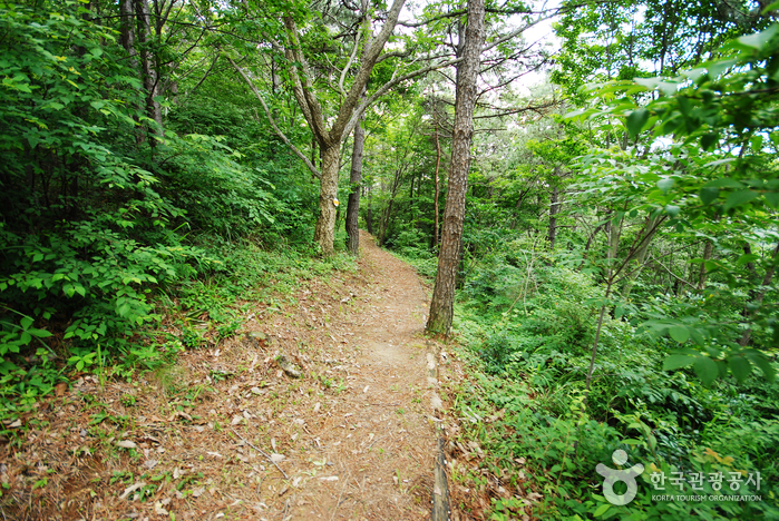 Cheongwansan National Recreational Forest (국립 천관산자연휴양림)