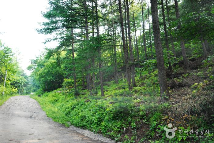 중미산자연휴양림