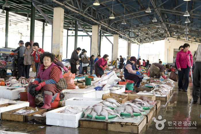 Jagalchi Market Live Sea Eels Section (부산 자갈치시장 활장어부)