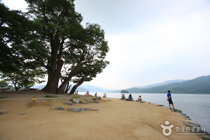 Dumulmeori and Zelkova trees (양평 두물머리)
