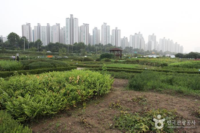 Jamsil Hangang Park (한강시민공원 잠실지구(잠실한강공원))