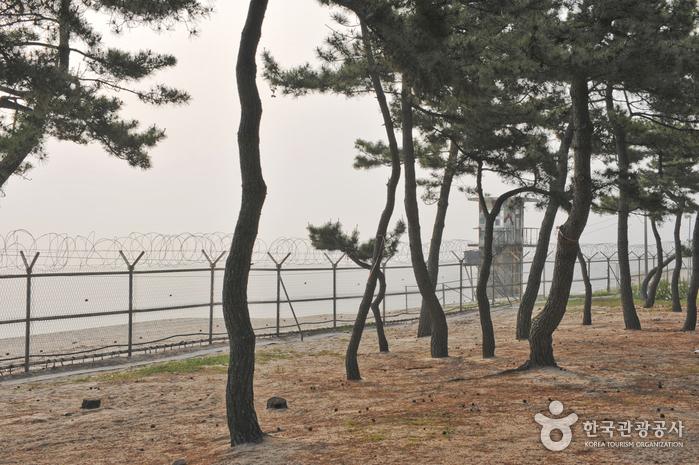 Sacheon Beach (사천해변 (사천해수욕장))