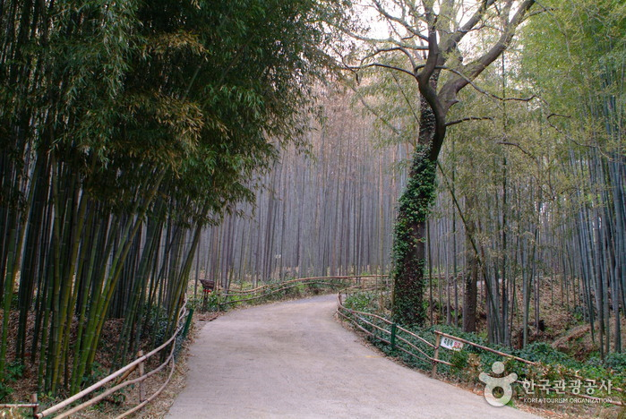 Daenamugol Bamboo Park (대나무골 테마공원)