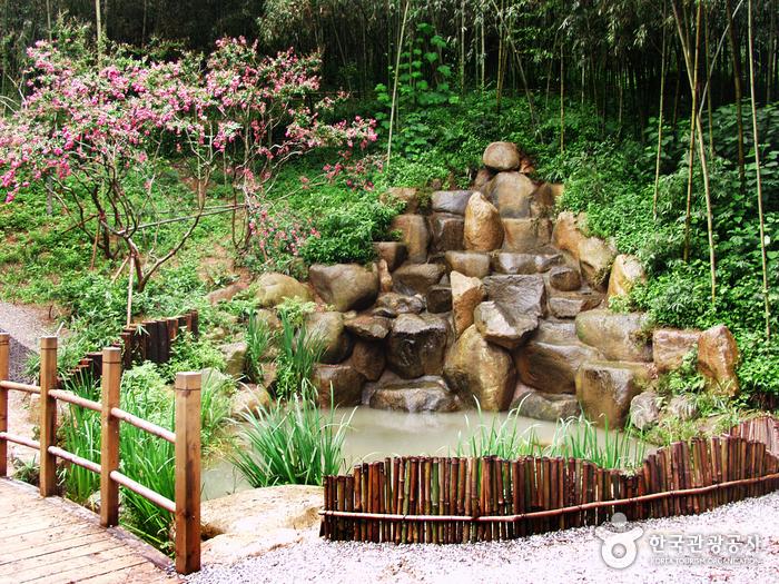 Juknokwon (Bamboo Garden) (죽녹원)