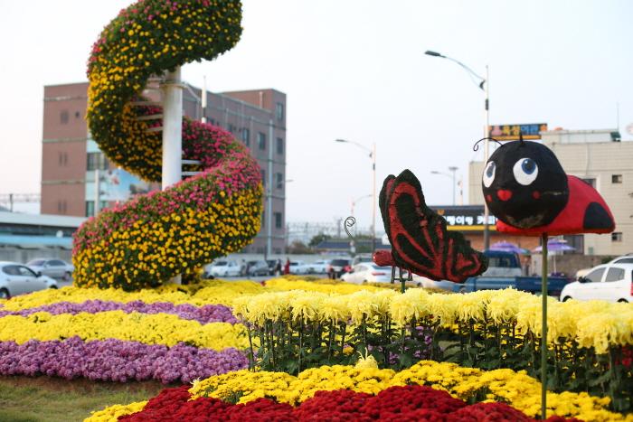 장성 가을 노란꽃잔치 2016 사진