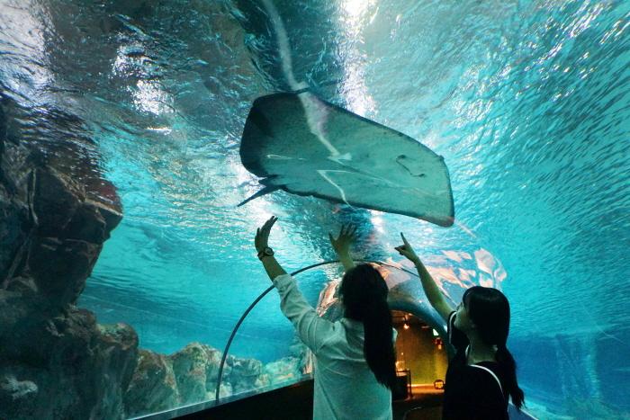 COEX水族館(코엑스 아쿠아리움)7