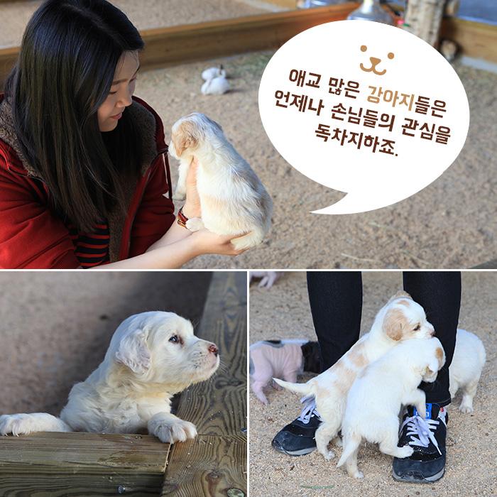 애교 많은 강아지들은 언제나 손님들의 관심을 독차지하죠.