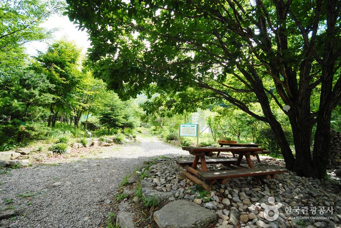 国立雲門山自然休養林(국립 운문산자연휴양림)