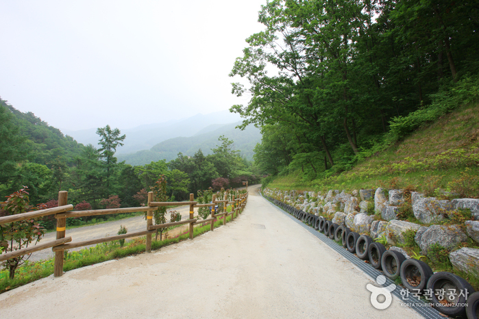 Jwagusan Natural Recreation Forest (좌구산자연휴양림)