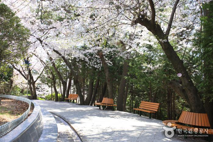 帝皇山公園(제황산공원)