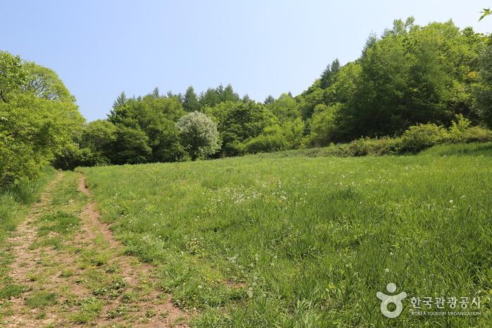 Dorf Taebaek Guwau (Alpiner, botanischer Garten)(태백 구와우마을(고원자생식물원))