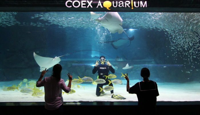 COEX水族館(코엑스 아쿠아리움)6