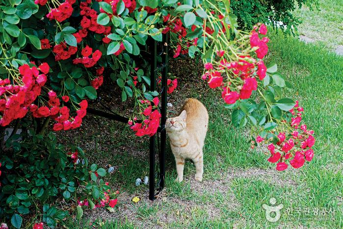 장미넝쿨 밑에 있는 고양이 한마리. 꼭 장미꽃 향기를 맡고있는 모습이다.