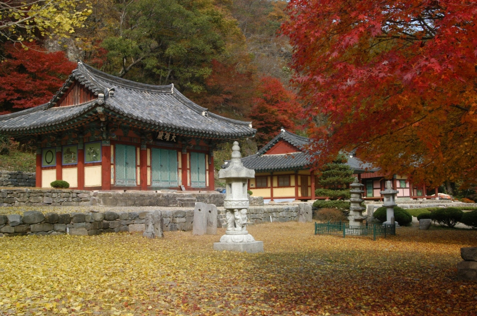 도선국사가 창건한 강천사에도 가을이 한창이다.