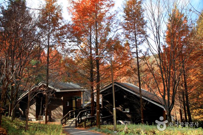 하룻밤 머물고 싶은 '숲속의 집'