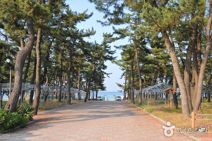 Пляж Ёнгок (연곡해변(연곡해수욕장))8
