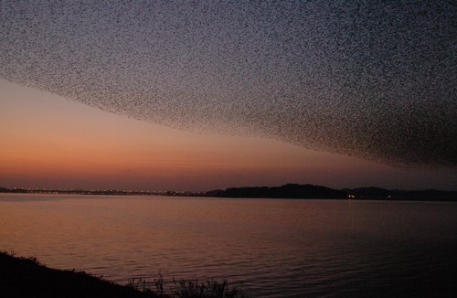 Gunsan International Migratory Bird Festival ()