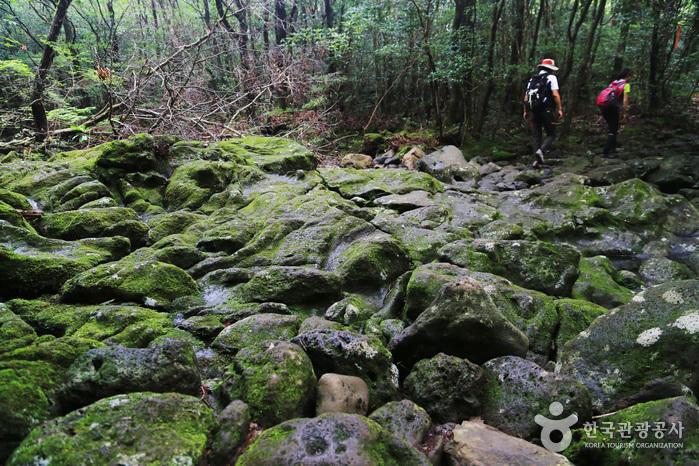 한라산 둘레길을 걷다 만나게 되는 다양한 모습의 계곡들