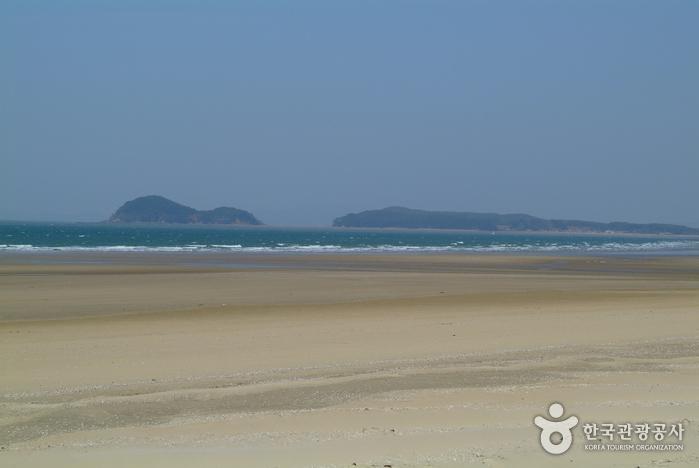 Anmyeon Beach (안면 해수욕장)