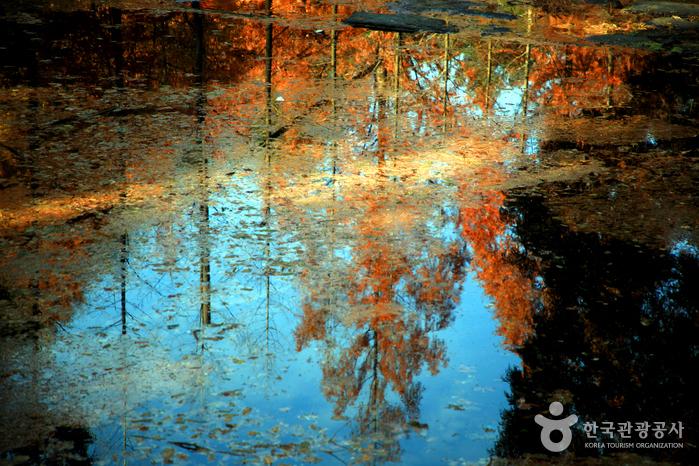 메타세쿼이아 그림자가 비친 아름다운 생태연못