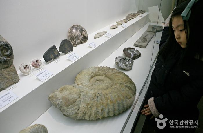 암모나이트 화석