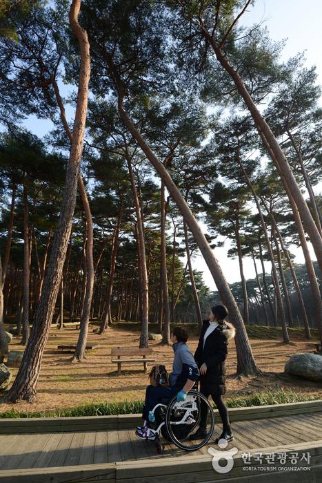 소나무 산책로 전경