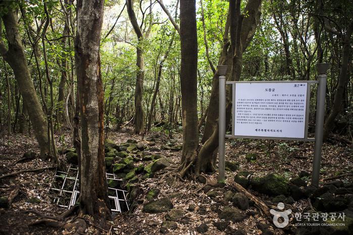 선흘 동백동산/곶자왈 (제주도 국가지질공원)