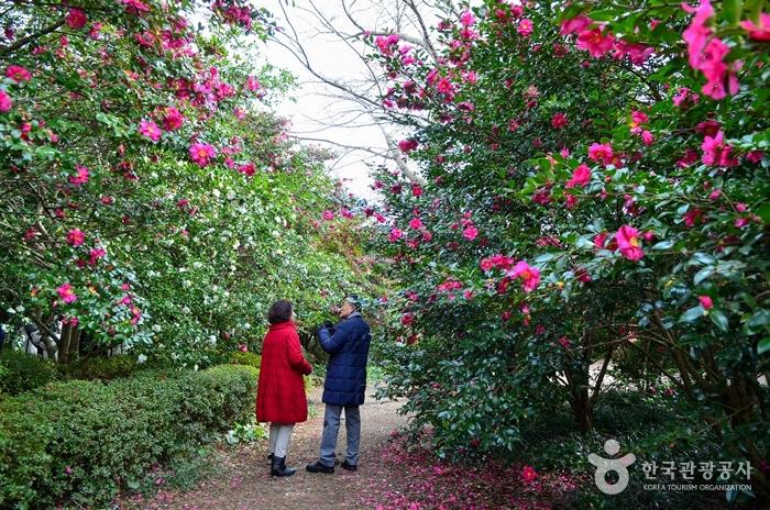 Camellia Hill (카멜리아힐)