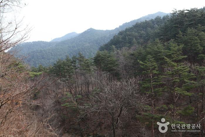 제왕산/능경봉