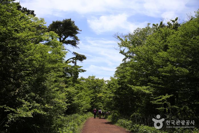 Лесная дорожка Сарёни (사려니숲길)3