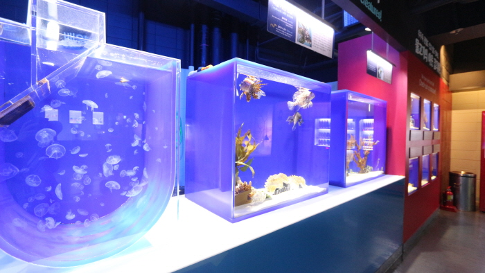 COEX水族館(코엑스 아쿠아리움)3