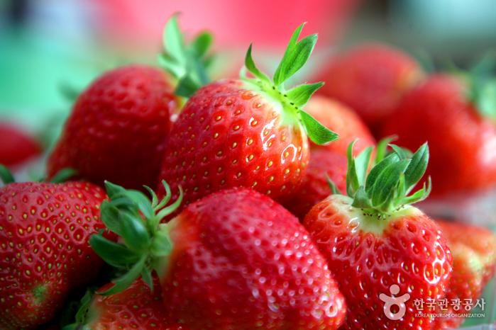 우리나라 딸기명인이 만든 딸기