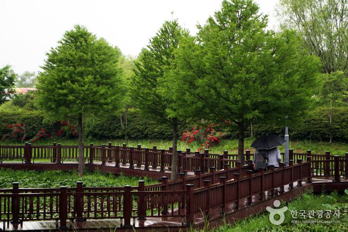 나무데크가 깔려있는 자연학습공원