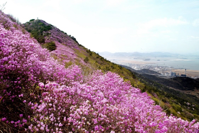Yeosu Yeongchwisan Mountain (영취산 (여수))