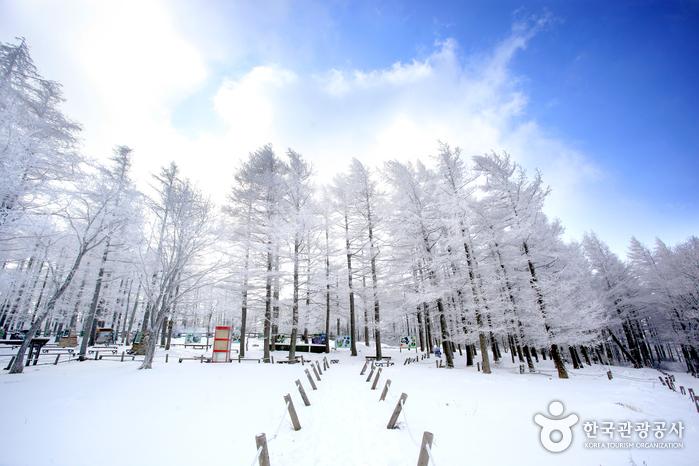 차 문 열면 눈부신 설경이 눈앞에, 만항재 눈꽃여행 사진