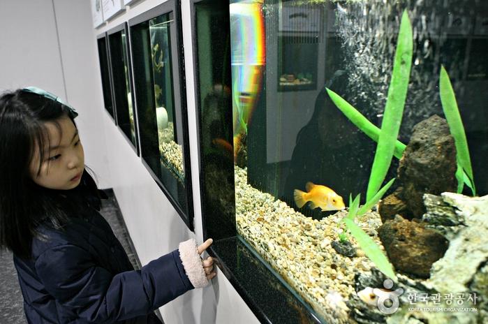 물고기를 구경하는 아이
