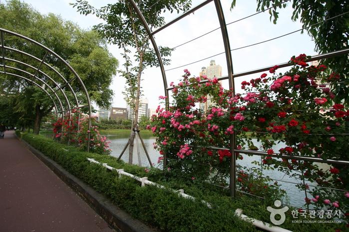 Парк Сонпханару (озеро Сокчхон) (송파나루공원(석촌호수))7