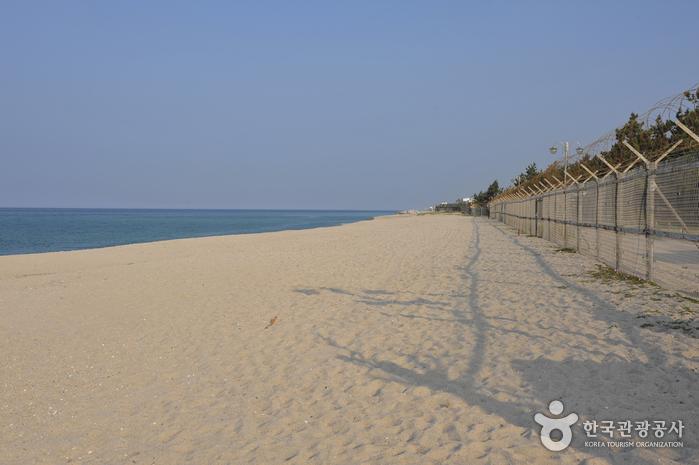 連谷海岸(連谷海水浴場)(연곡해변(연곡해수욕장))