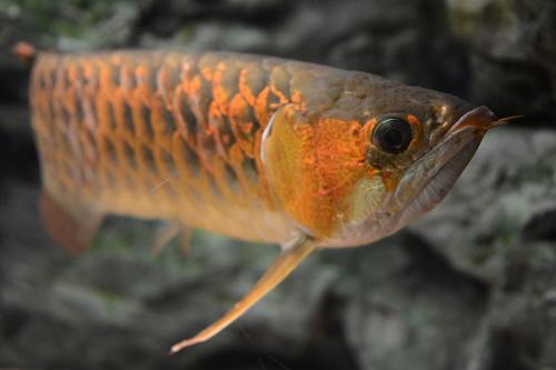 민물고기생태체험관 사진21