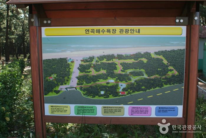 Пляж Ёнгок (연곡해변(연곡해수욕장))5
